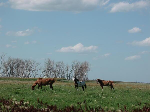 Three Horse Ranch Print by Brian  Maloney