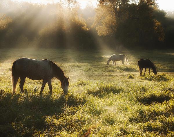 Ron  McGinnis - Three Horse Sunrise