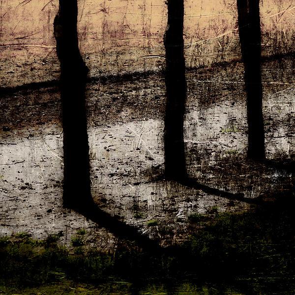 Three Tree Trunks Print by Carol Leigh