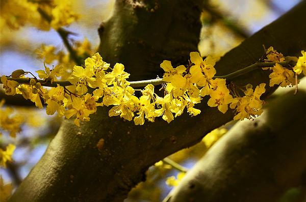 Saija  Lehtonen - Through the Branches