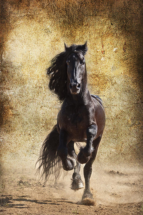 Thundering Stallion D6574 Print by Wes and Dotty Weber