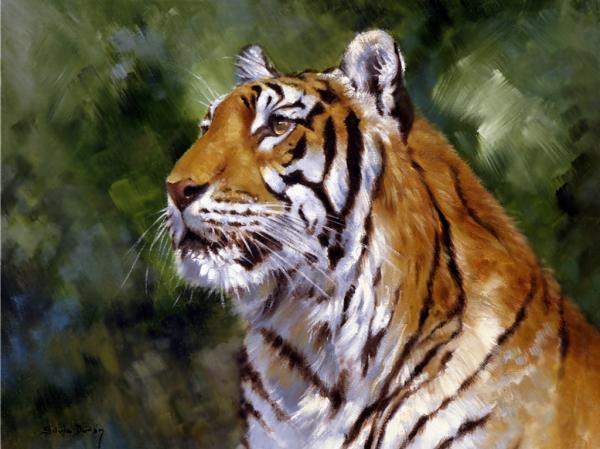 Tiger Alert Print by Silvia  Duran