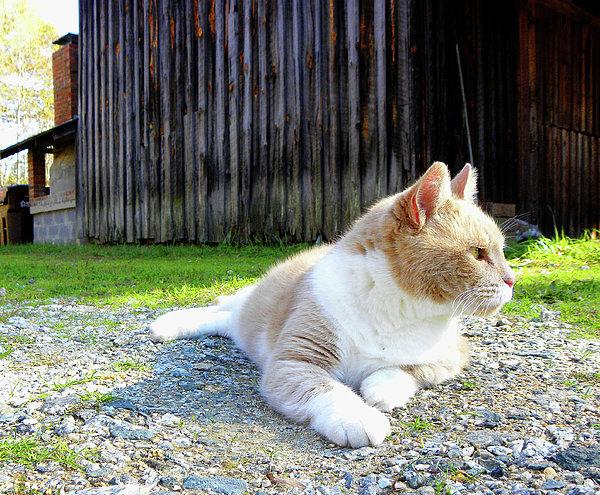Sandi OReilly - Toby Old Mill Cat