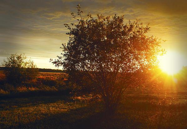 Larysa Luciw - Tonights Sunset