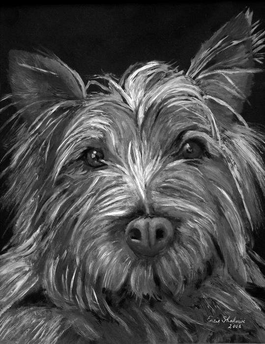 Tosha the Highland Terrier Painting