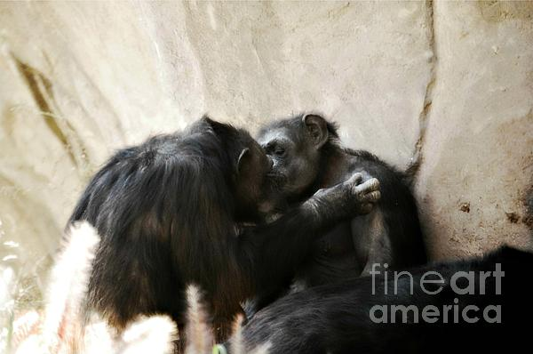 Peggy  Franz - Touching Moment Gorillas Kissing