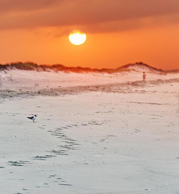 Toward The Sunrise Print by Vicki Jauron