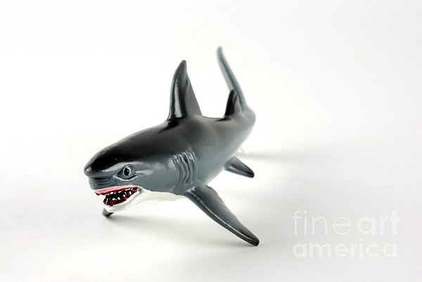 Toy Shark Print by Photo Researchers, Inc.
