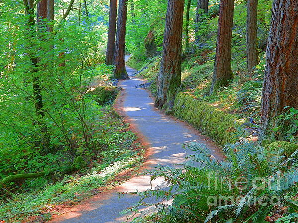 J J - Trail Through Nature