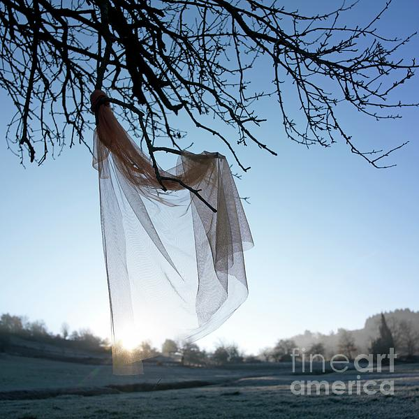 Transparent Fabric Print by Bernard Jaubert