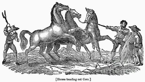 Treading Corn, 1833 Print by Granger