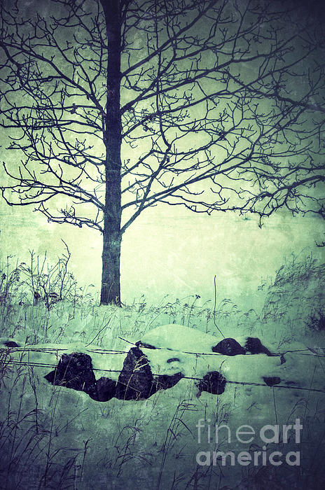 Tree And Fence In The Fog And Snow Print by Jill Battaglia
