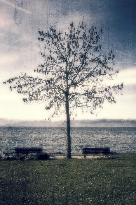 tree at lake Constance Print by Joana Kruse