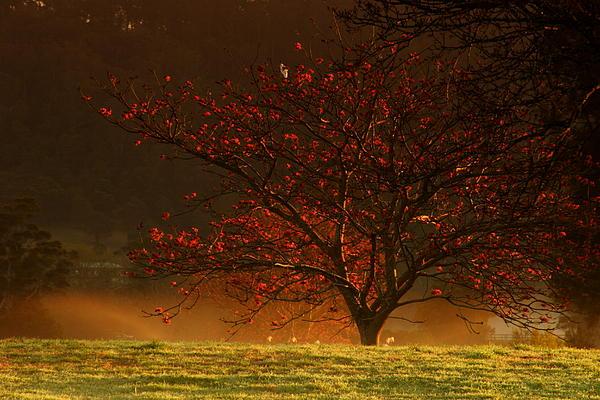 Tree At Sunrise Print by Noel Elliot