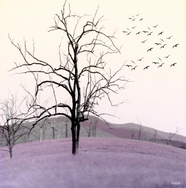 Tree Change Print by Holly Kempe