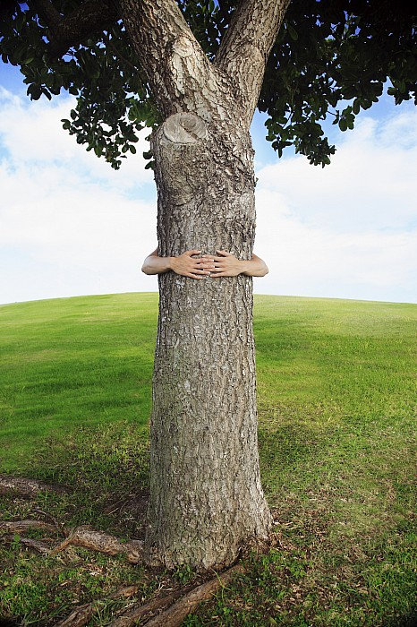 Tree Hugger 3 Print by Brandon Tabiolo - Printscapes