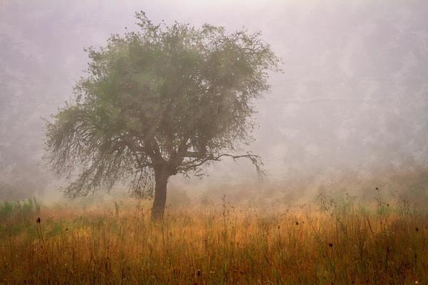 Tree In Fog Print by Debra and Dave Vanderlaan
