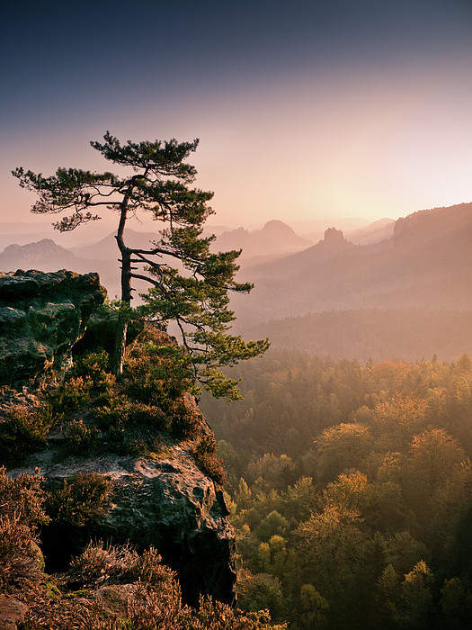 Andreas Wonisch - Tree In Morning Llght In Saxon Switzerland