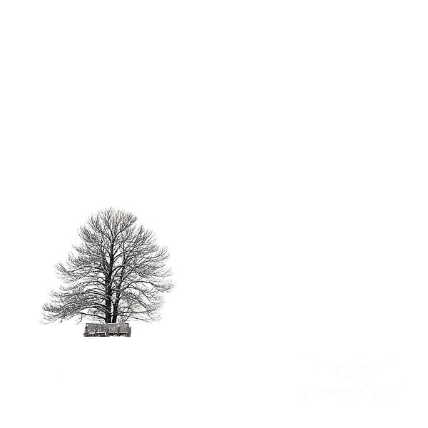 Tree Isolated Under The Snow In The Middle Field In Winter. Print by Bernard Jaubert