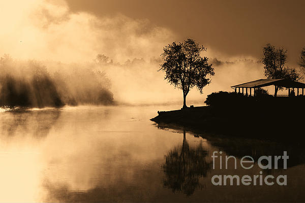 Tree Midst The Fog- Sepia Print by Gina Collins