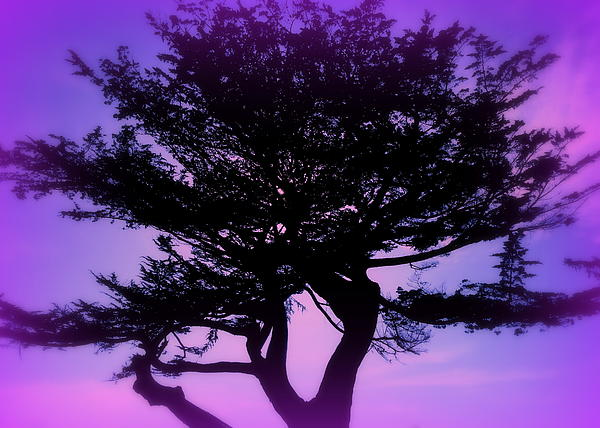 Tree Of Glory Print by Cindy Wright