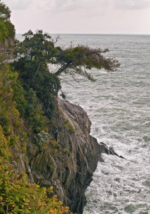 Tree On A Cliff Print by Lynn Andrews