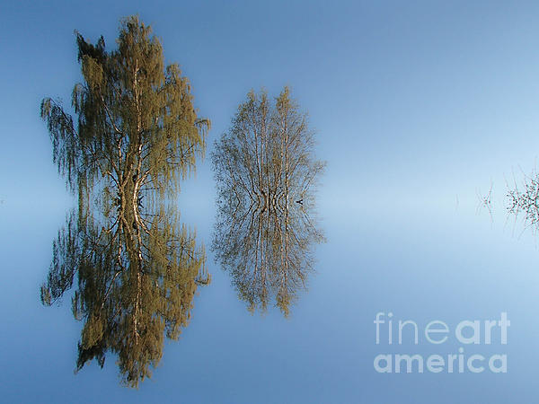 Michael Canning - Tree reflection in Vaerebrovej