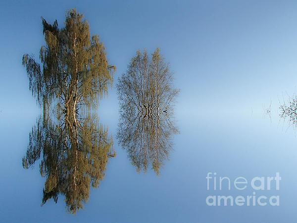 Michael Canning - Tree reflection in Vaerebrovej