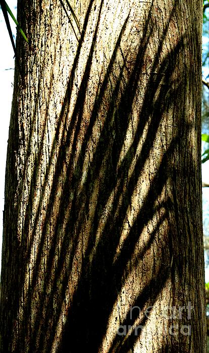 Tree Shadows Print by Theresa Willingham