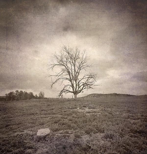 Guido Montanes Castillo - Tree Under The Rain