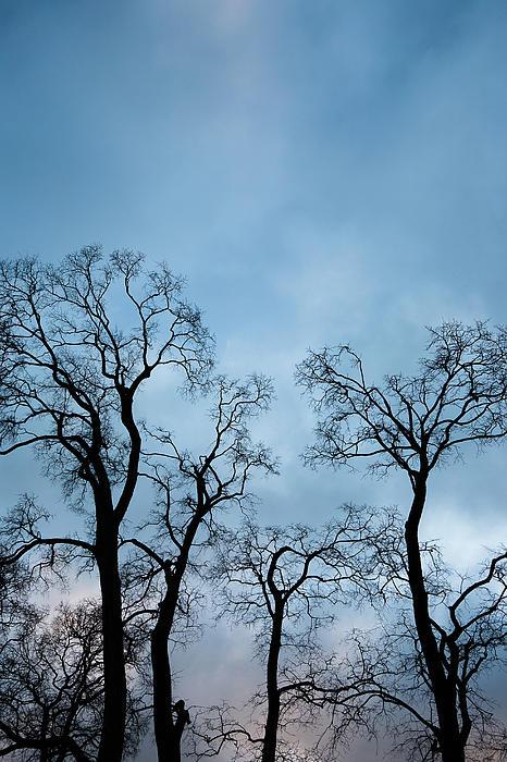 Trees. Autumn. Print by Konstantin Dikovsky