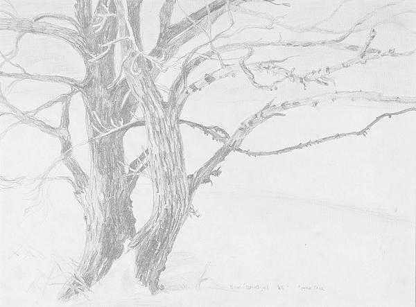 Trees In A Snow Storm Print by David Bratzel