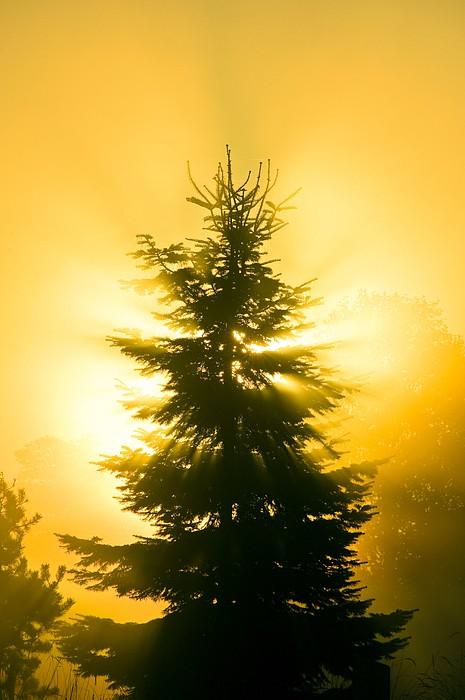 sun fog sunrise trees - photo #33