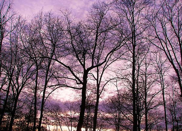 Pamela Hyde Wilson - Trees In Glorious Calm