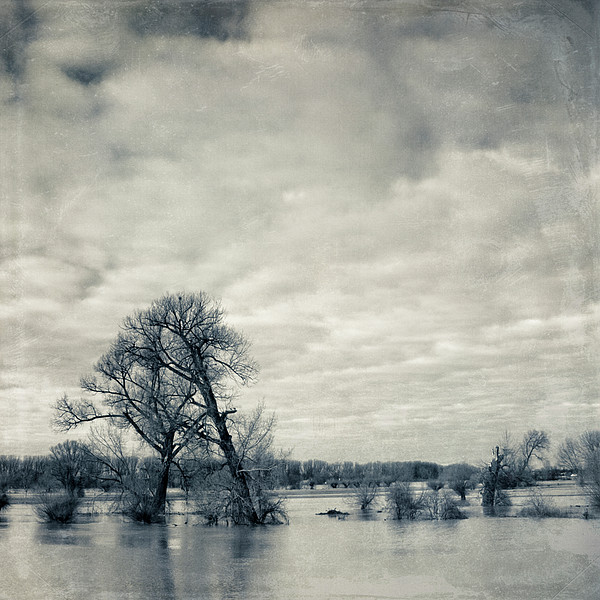 Trees In River Rhine Print by Dirk Wüstenhagen Imagery