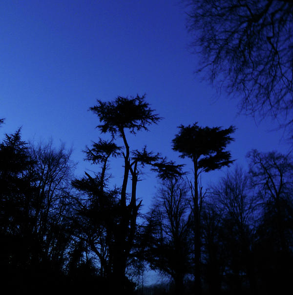 Trees In Silhouette Photograph  - Trees In Silhouette Fine Art Print