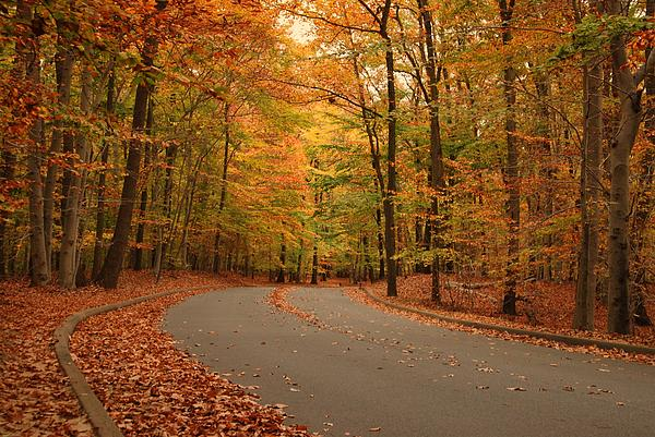 Trees Of Autumn - Holmdel Park Print by Angie Tirado