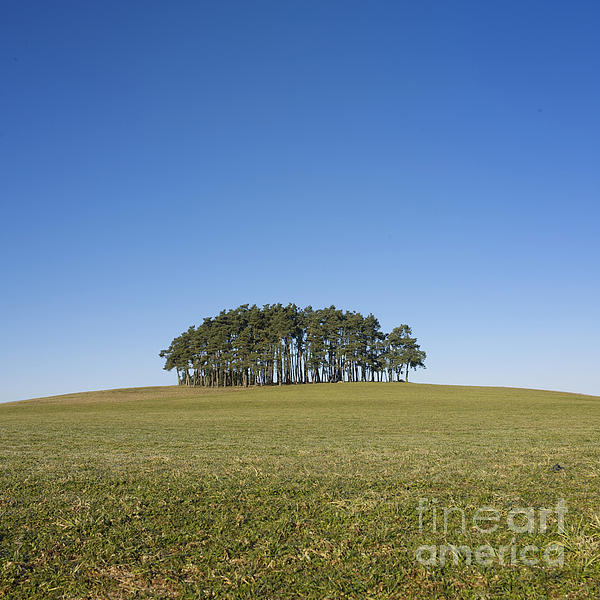 Trees On The Hill Print by Bernard Jaubert