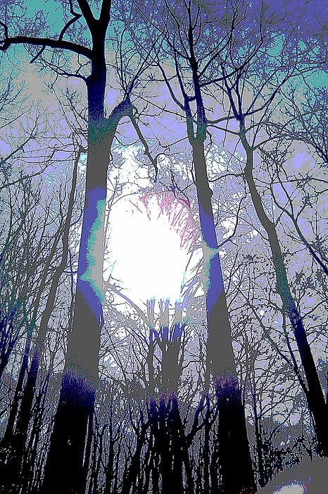 Debrosi   - Trees on the Trail