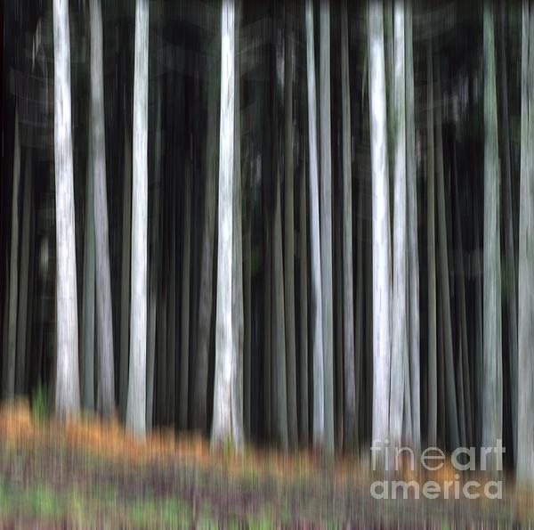 Trees Trunks Print by Bernard Jaubert
