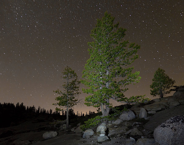 Trees Under Stars Print by Sean Duan