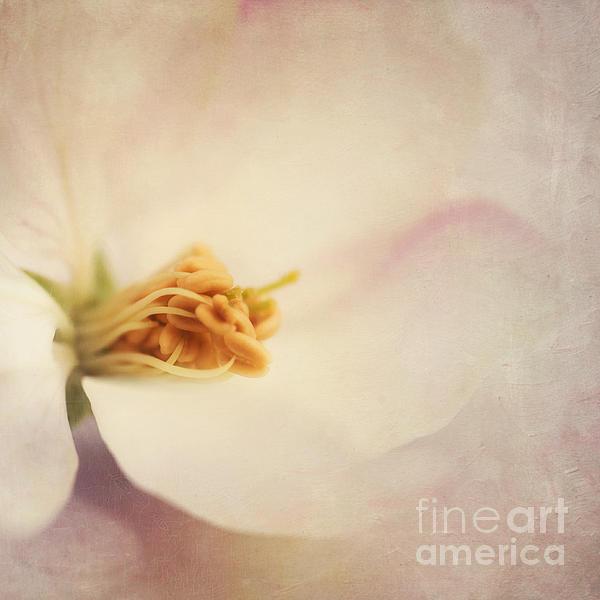 Tresfonds Heart Of A White Blossom Print by Priska Wettstein