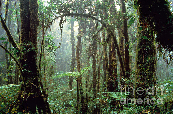 Tropical Cloud Forest Print by Gregory G. Dimijian