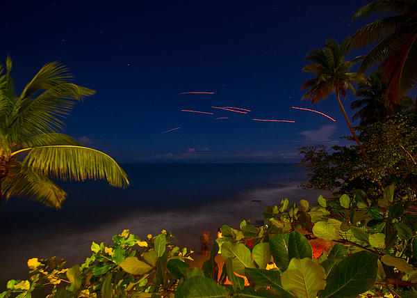 Tropical Night Print by Tim  Fitzwater