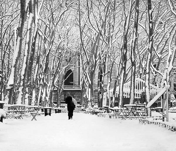 Trudging Through The Snow Photograph  - Trudging Through The Snow Fine Art Print