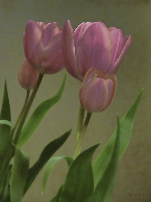Tulips Reflections Print by Debra     Vatalaro