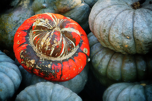 Joan Carroll - Turban pumpkin