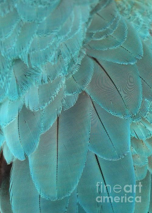 Sabrina L Ryan - Turquoise Feathers