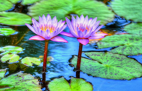 Debbi Granruth - Twin Lilies