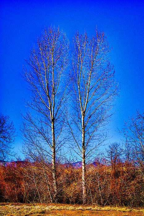 Twin Trees at South Platte Park Photograph